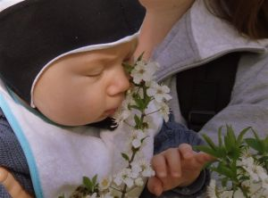 mirosind-florile